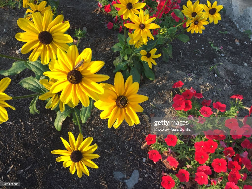 Bright Flowers : Stock Photo