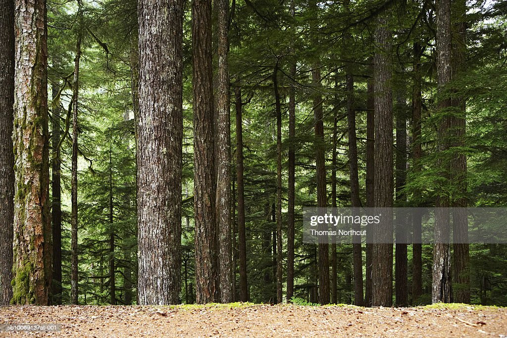 Bright forest : Stockfoto