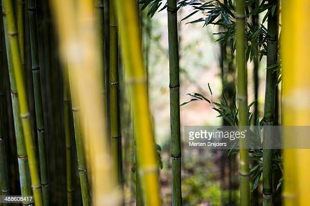 Bright green bamboo tree branches