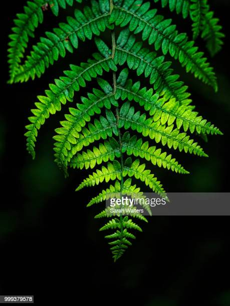 Bright Green Bracken