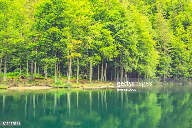 Bright green forest natural walkway in sunny day light. Sunshine woods trees. Sun through vivid green forest. Outdoor peaceful forest trees with sunlight.