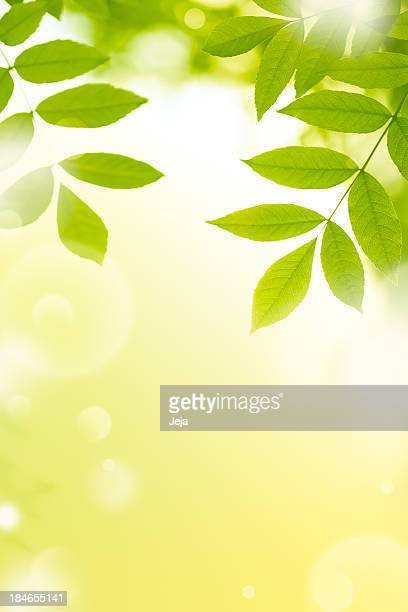 Bright green leaves on a yellow background