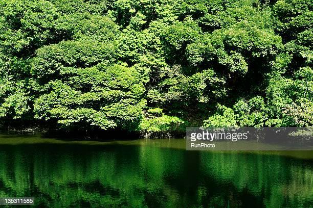 Bright green pond