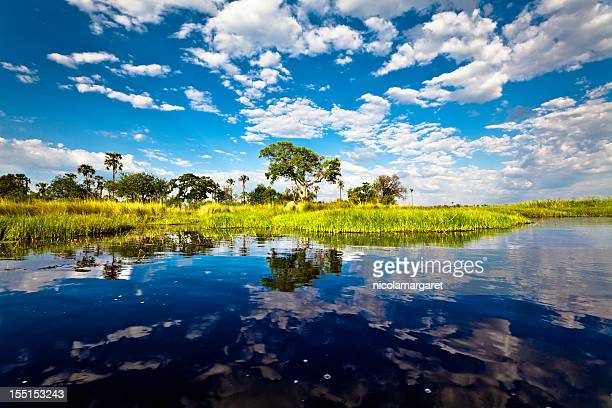 bright landscape view of okavango delta, botswana - botswana stock pictures, royalty-free photos & images