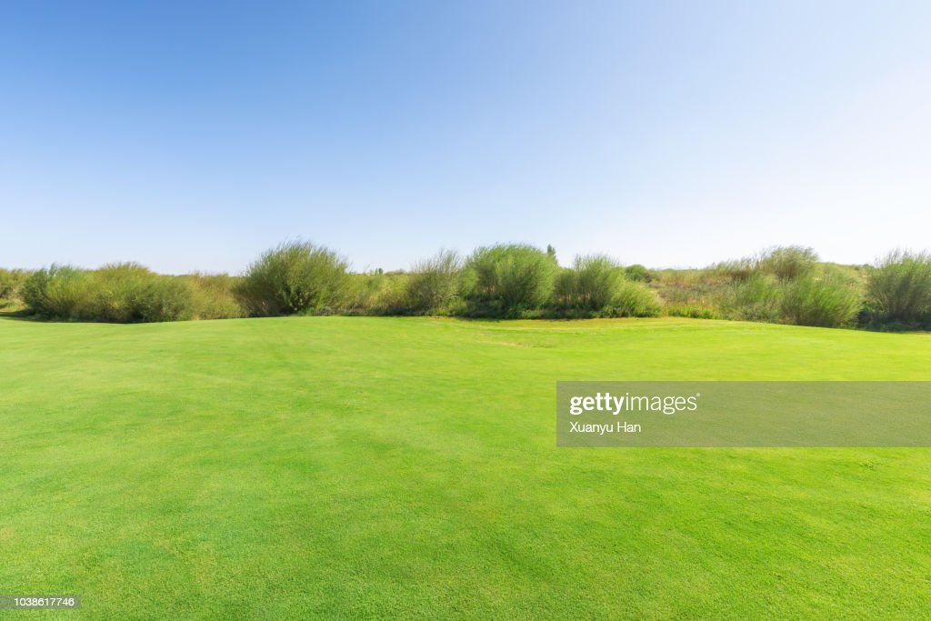 bright lush grass field and blue sunny sky. : Stock-Foto