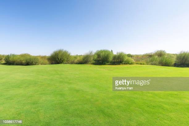 bright lush grass field and blue sunny sky. - wiese stock-fotos und bilder