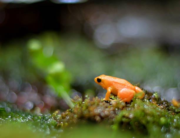 Bright orange frog