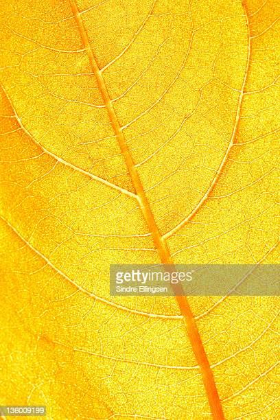 A bright orange leaf