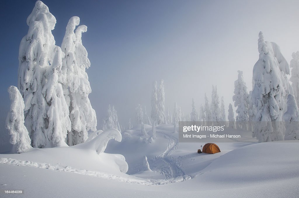 A bright orange tent among snow covered trees, on a snowy ridge overlooking a mountain in the distance. : Foto de stock