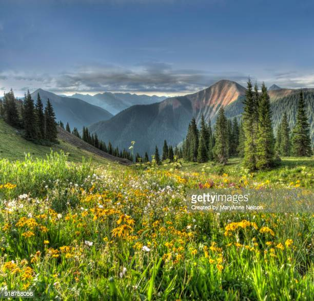 Bright Panorama of Wildflowers and Mountain Range