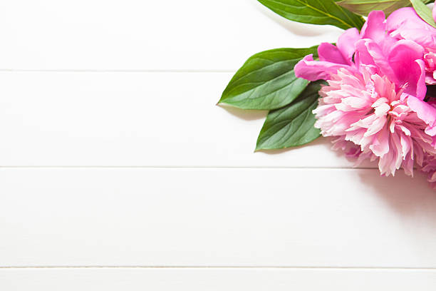 Free flower white background images pictures and royalty free bright pink peonies on white wooden background mightylinksfo