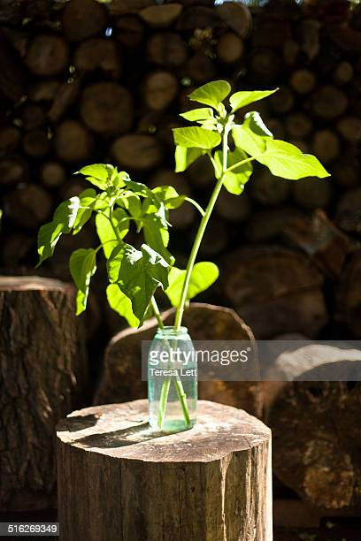 Bright plant in glass jar