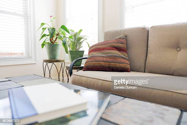 bright reading spot - bromeliad stock photos and pictures