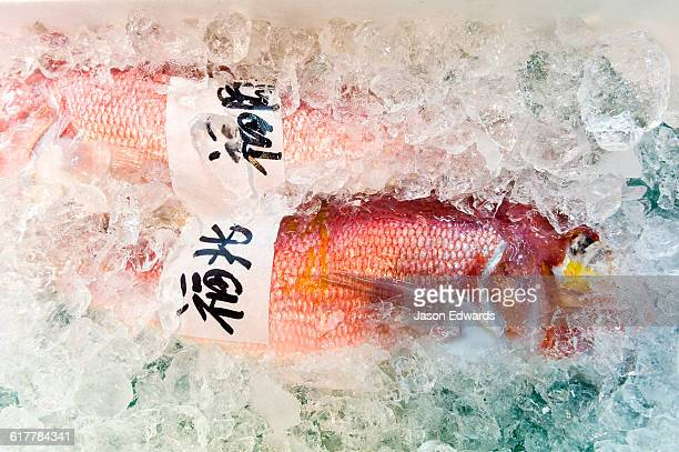 A bright red fish placed in ice for sale in a fish market.