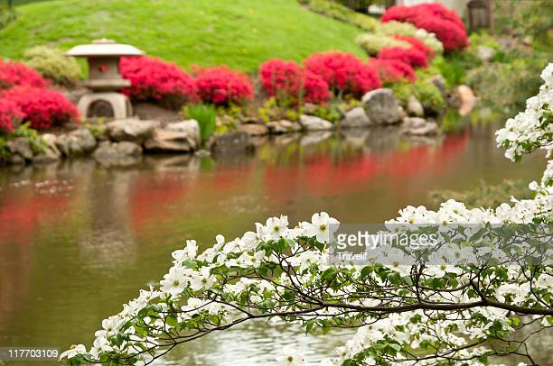 Bright spring colors of blooming Japanese garden