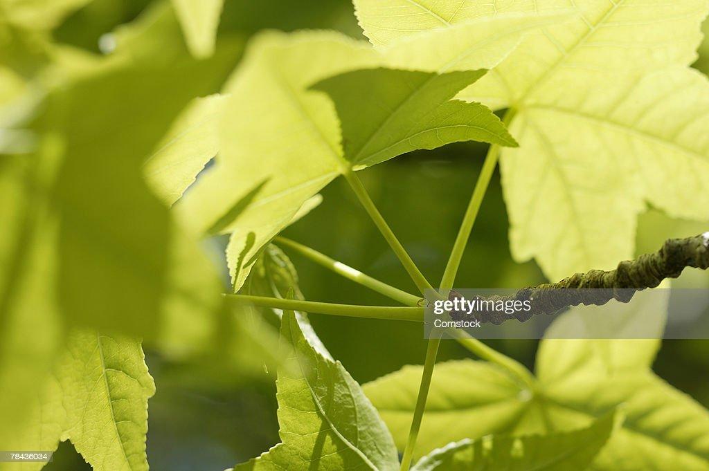 Bright spring green leaves : Stockfoto