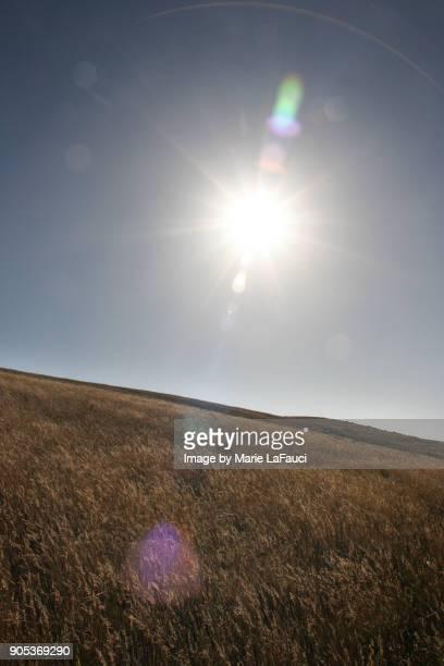 Bright sun flare above a wheat field