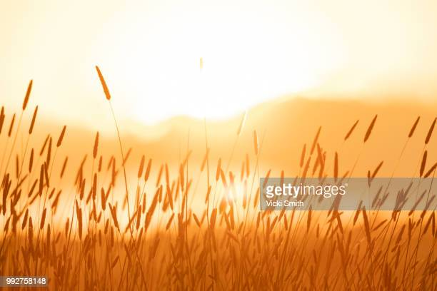 bright sunlight over field - fall harvest stock pictures, royalty-free photos & images
