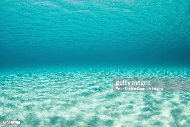 Bright sunlight ripples across a shallow sand seafloor in the tropical Pacific Ocean.