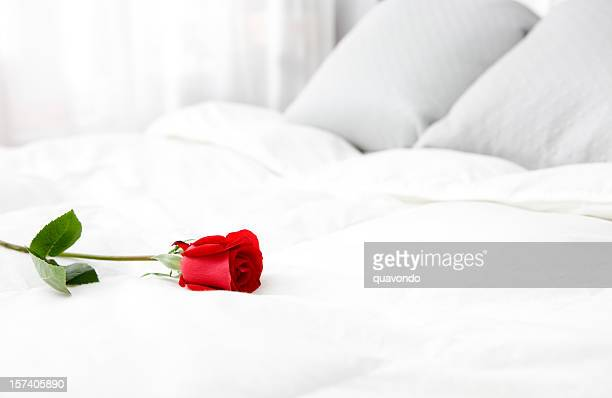 bright white bedroom with single rose, copy space - single rose stock photos and pictures