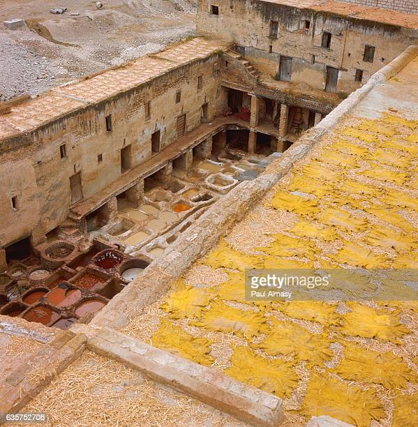 Bright yellow animal skins dry on a rooftop after removal from the dyeing vats at a tannery in Fez Morocco