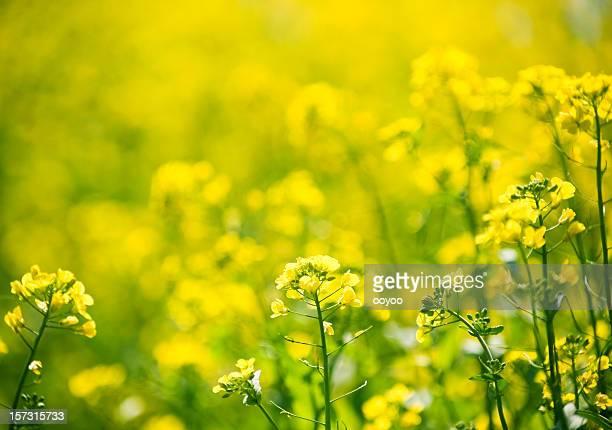 Helle gelbe Blume