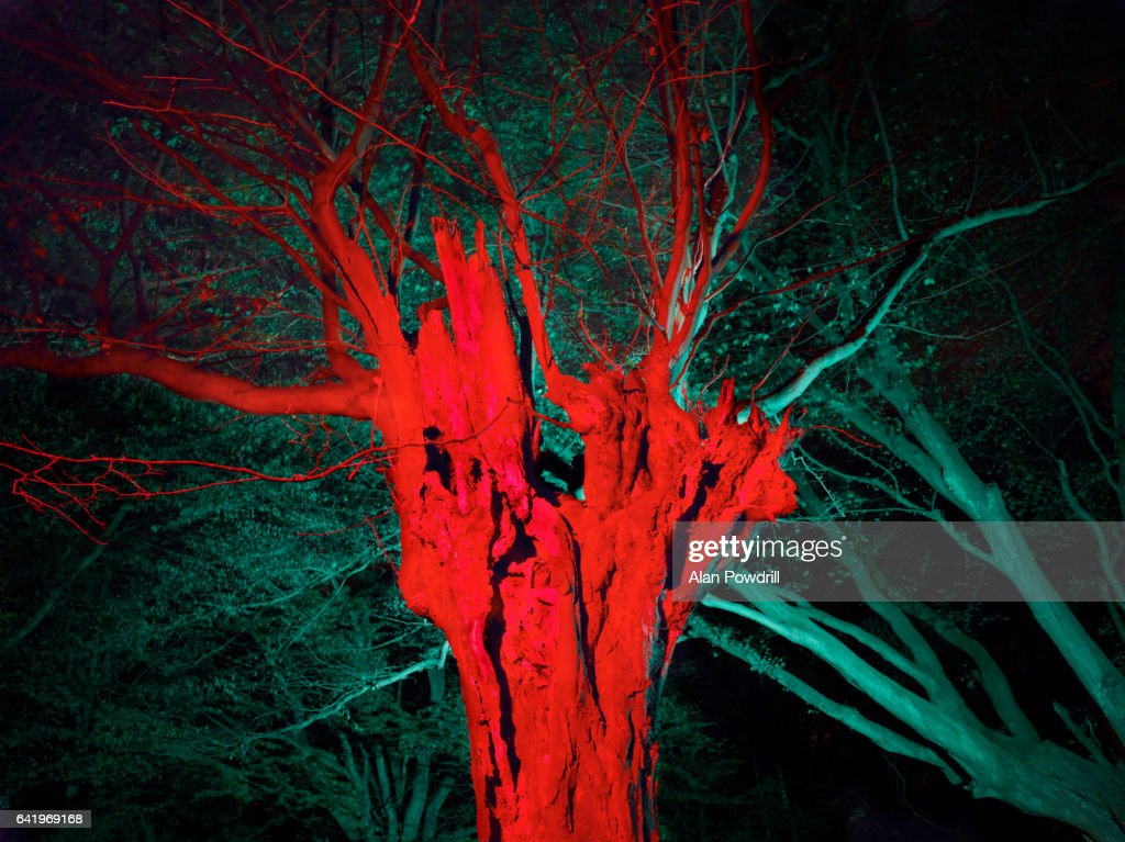 Brightly Colored Winter Tree At Night : Stock Photo
