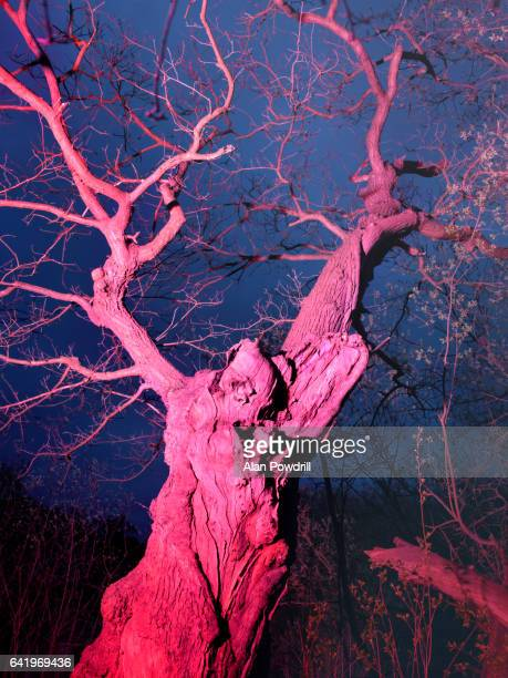 Brightly Colored Winter Tree At Night
