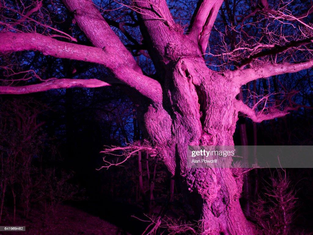 Brightly Colored Winter Tree At Night : Foto de stock