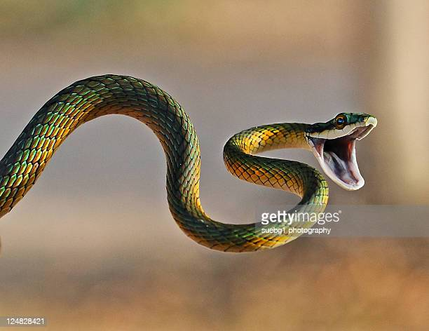 brightly coloured parrot snake - snake stock pictures, royalty-free photos & images