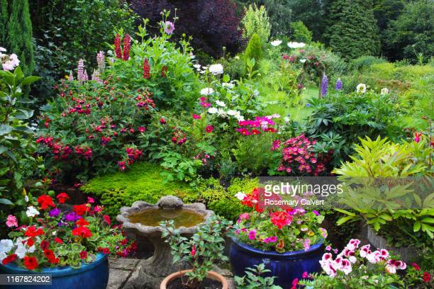 brightly coloured summer flowers in patio pots & flowerbed. - pot plant stock pictures, royalty-free photos & images