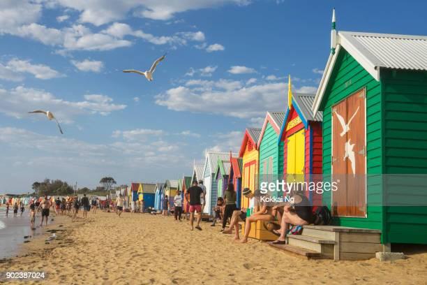 brighton beach - seagulls - melbourne australia stock photos and pictures