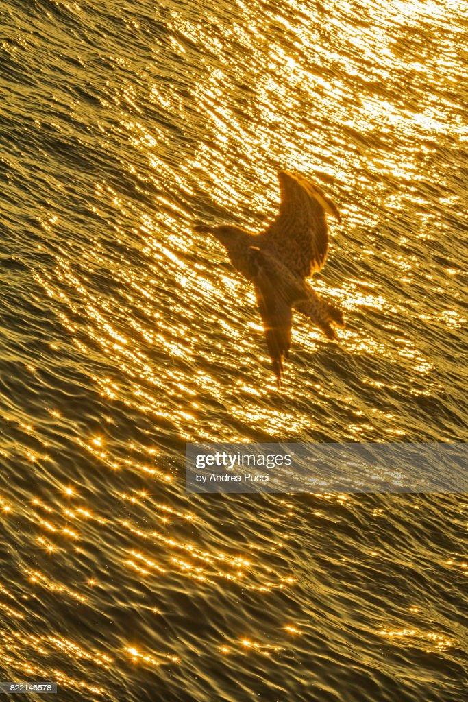 Brighton, East Sussex, United Kingdom : Stock Photo