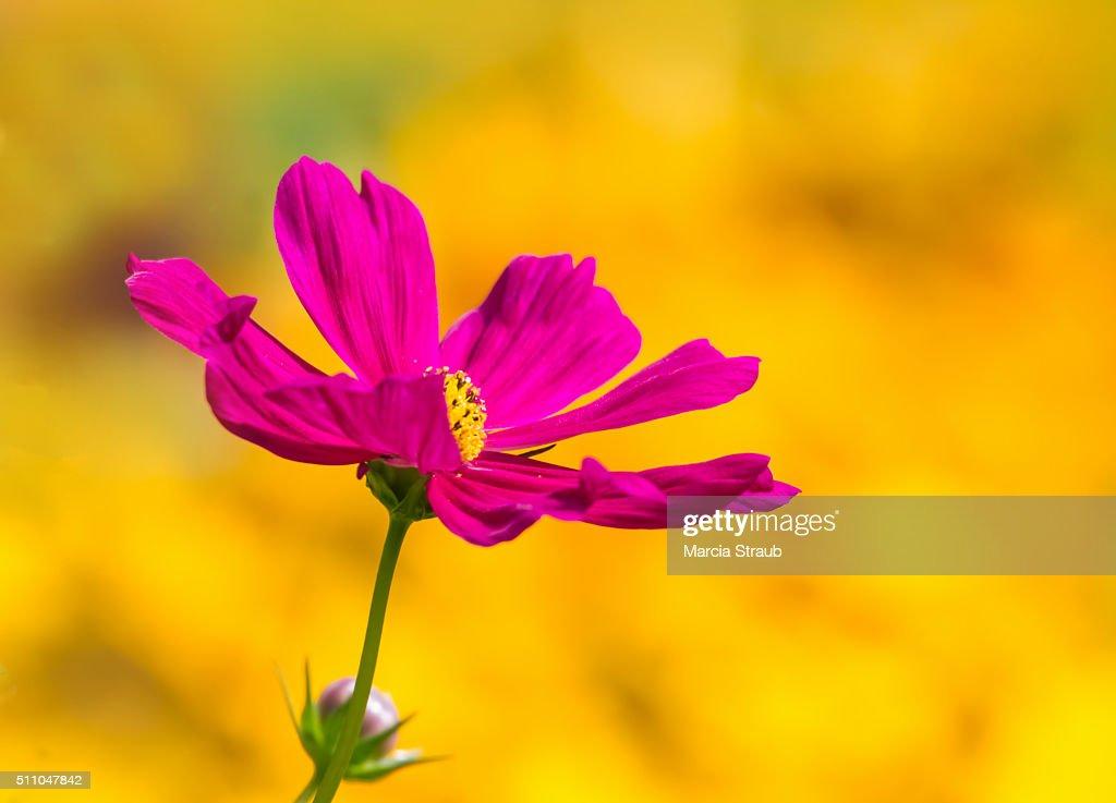 Brillant Colors : Stock Photo