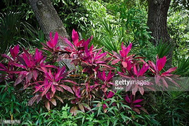 Brilliant Tropical Foliage