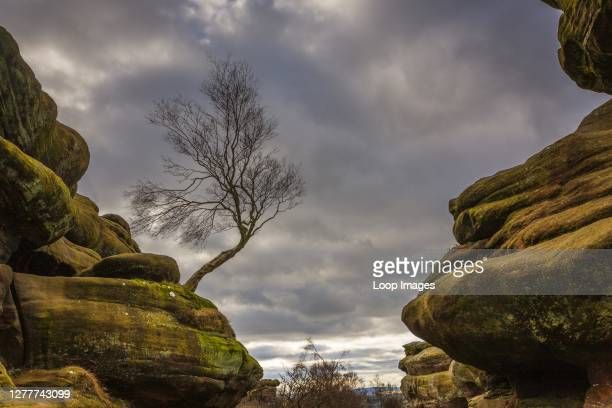 Bill Allsopp/Loop Images/Universal Images Group via Getty Images