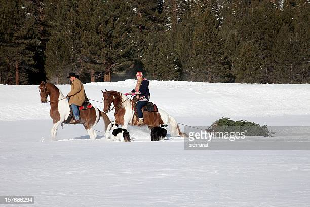 bringing home the christmas tree - christmas horse stock pictures, royalty-free photos & images