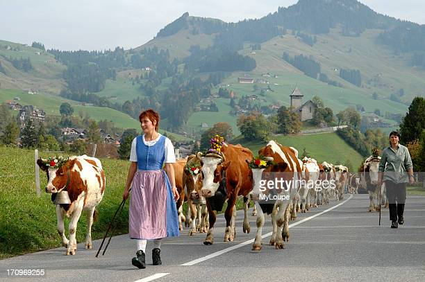 Bringing the cattle down from the mountain pastures of Chateau d'Oex Berner, Oberland, Switzerland.