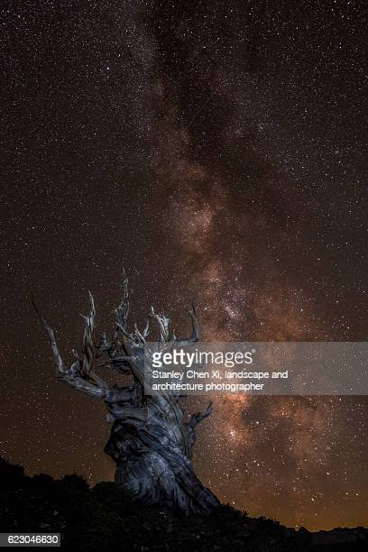 bristlecone pine night sky - great basin stock pictures, royalty-free photos & images
