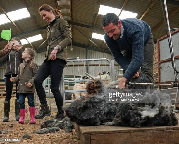 Britain's Catherine Duchess of Cambridge reacts as she tries sheep shearing at Deepdale Hall Farm a traditional fell sheep farm on June 11 in...