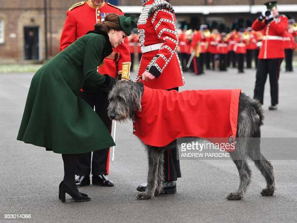 Britain's Catherine Duchess of Cambridge strokes an Irish Wolfhound as she attends the St Patrick's Day Parade with the 1st Battalion Irish Guards at...