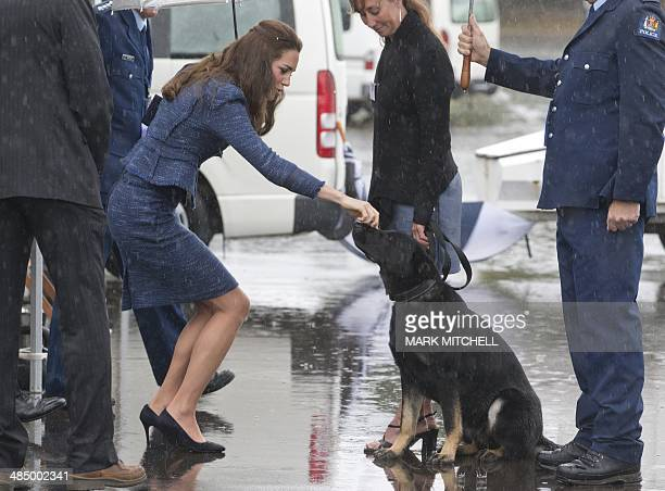 Britain's Catherine the Duchess of Cambridge pets a police dog as she visits the Royal New Zealand Police College in Wellington on the final day of...