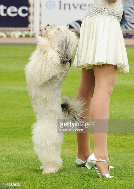 Britain's Got Talent winners Pudsey the dog and Ashleigh Butler attend Investec Derby Day at the Investec Derby Festival, the first official event of...