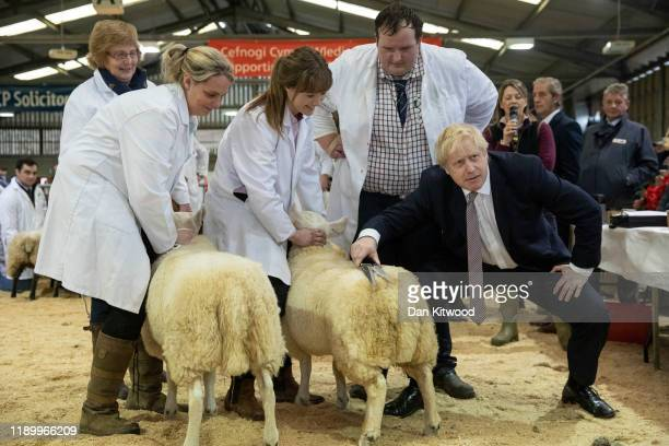 Britain's Prime Minister and Conservative Party leader Boris Johnson trims a sheep while visiting the Royal Welsh Winter Fair on November 25, 2019 in...