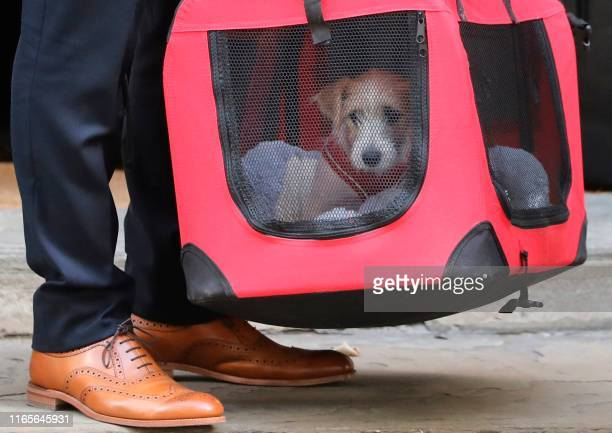Britain's Prime Minister Boris Johnson and Carrie Symonds' new male Jack Russell puppy Dilyn a rescue dog provided by Friends of Animals Wales is...
