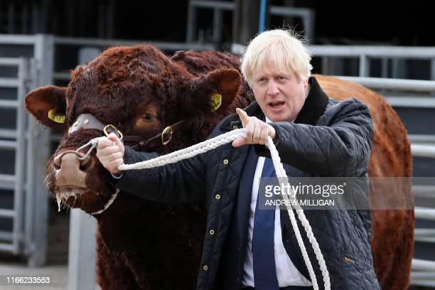 TOPSHOT Britain's Prime Minister Boris Johnson tries to walk a bull during a visit to Darnford Farm in Banchory near Aberdeen in Scotland on...