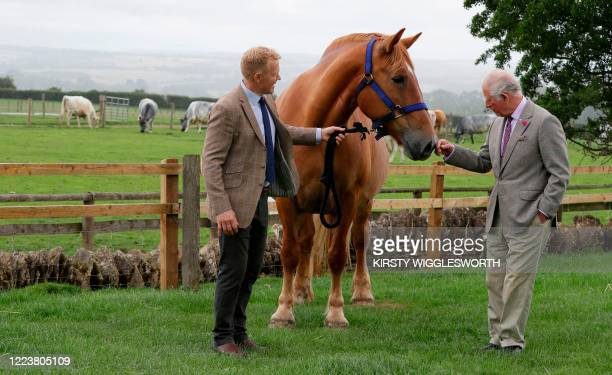 Britain's Prince Charles Prince of Wales is introduced to Victoria a Suffolk Punch horse by farmer and television personality Adam Henson during his...