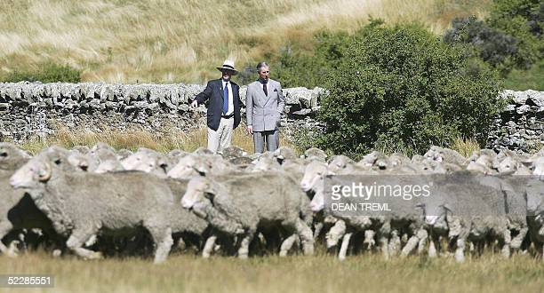 Britain's Prince Charles talks with New Zealand Agriculture Minister Jim Sutton as Merino sheep are mustered past during a visit to Moutere Sheep...