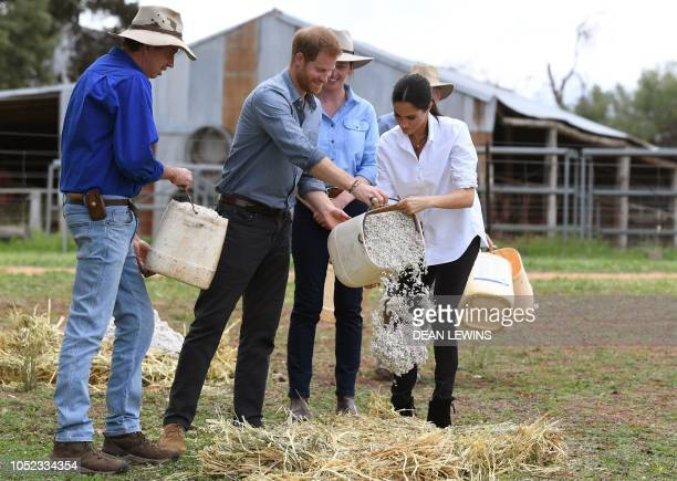 Britain's Prince Harry and his wife Meghan Duchess of Sussex pour hand fed from a bucket with farmer Scott Woodley and daughter Laura Woodley during...