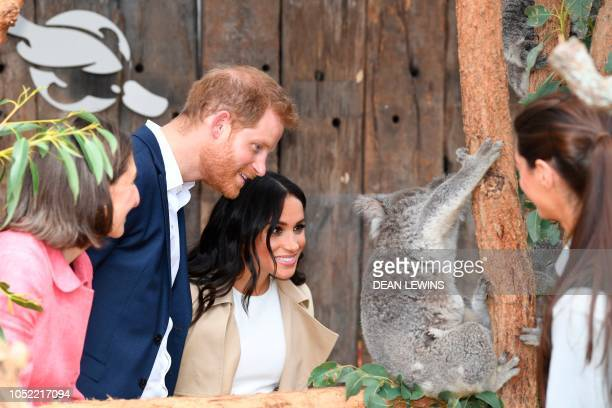 TOPSHOT Britain's Prince Harry and his wife Meghan meet a koala named Ruby and its koala joey named Meghan after the Duchess of Sussex during a visit...